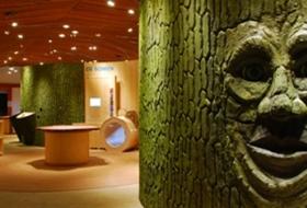 Forest Information Centre Het Leen.