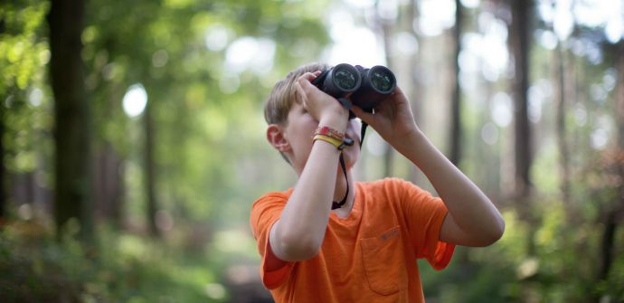 Stekene voor jonge ontdekkers