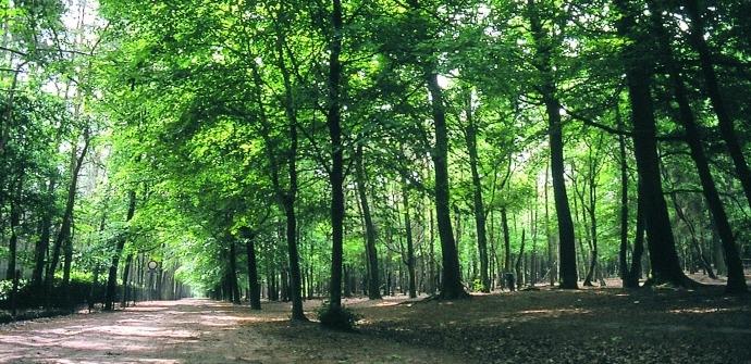 Bois de Lembeke