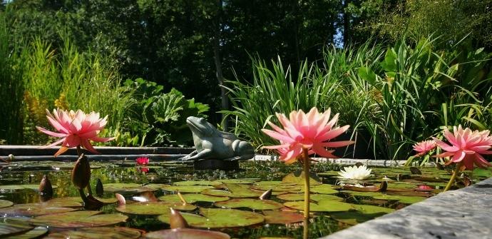 wetterse watertuin