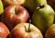 Een afbeelding van Fruitbedrijf Berckelaer